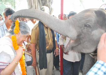 Subhashini Being Garlanded by an Elephant at Kalyanpur